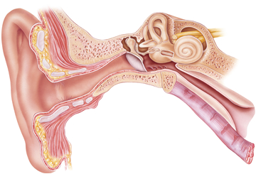 日本 耳鼻 咽喉 科学 会 秋季 大会